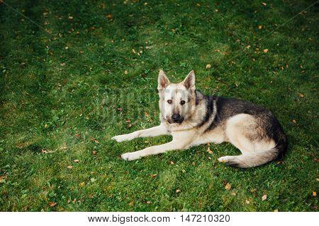 dog lying on green grass