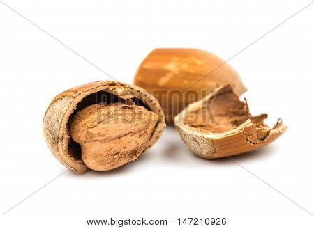 hazel nuts in the shell on a white background
