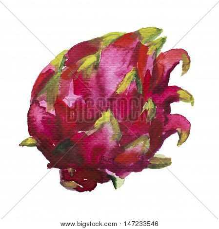 Dragonfruit watercolor painting isolated on white. Exotic fruit clipart. Pink and red watercolour pitahaya image. Hand-painted tropic plant. Sweet and healthy vegetarian food. Botanical illustration