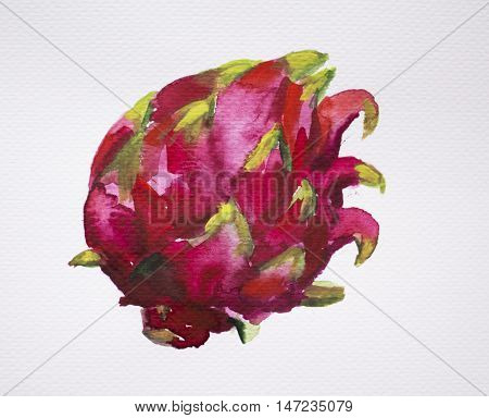 Dragonfruit watercolor painting on white. Exotic fruit clipart isolate. Pink and red watercolour pitahaya image. Hand-painted tropic plant. Sweet and healthy vegetarian food. Tropical botany ipicture