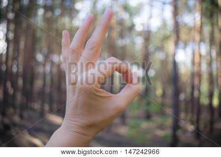 OK sign gesture made by hand on coniferous forest background