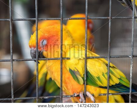 colorful parrot bird sleeping in the caged