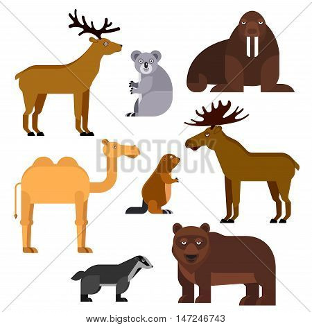 Wild animals flat cartoon isolated icons. Vector zoo emblems of walrus, koala, camel, elk, beaver, bear, deer, badger for infographic, kindergarten locker identity label, t-shirt