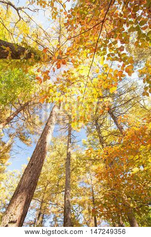 Beautiful colorful autumn trees yellow red and green in forest