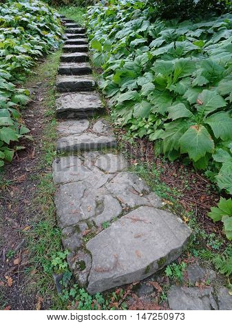 Steps pathway forest landscape photographed at Colby Woodland Garden near Amroth in Pembrokeshire