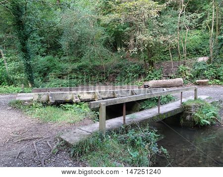 Bridge across river and forest landscape photographed at Colby Woodland Garden near Amroth in Pembrokeshire