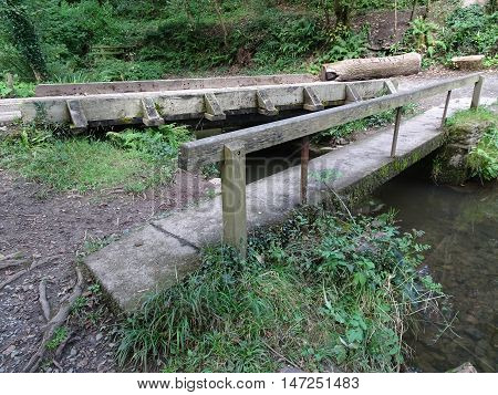 Bridge across river and forest photographed at Colby Woodland Garden near Amroth in Pembrokeshire