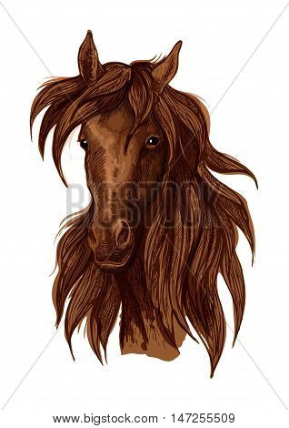 Brown horse artistic portrait. Mustang with long wavy flying mane looking straight forward