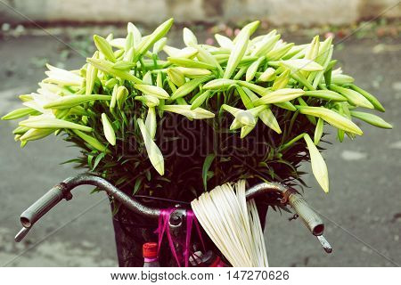 Mandona lilly flower on the bicycle in Hanoi