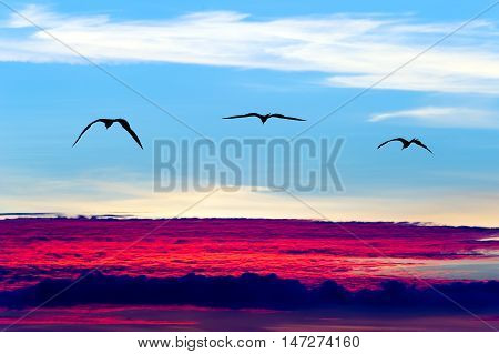 Birds flying silhouettes is three birds flying with wings spread soaring over a surreal ethereal blue sky cloudscape.
