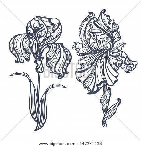 graceful isolated iris in vintage style Art Nouveau. It can be used as embossing tattoo postcards or engraving
