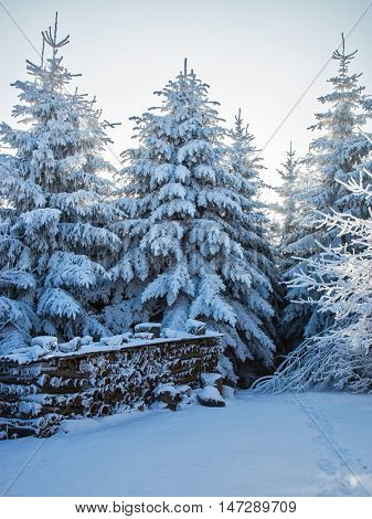 Christmas forest in the snow. Early morning in a forest glade with traces of skis. On a glade the accurate woodpile is put
