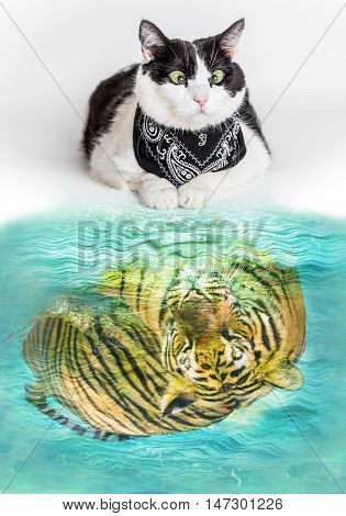 Cat with black bandana reflected in a pool of water seeing a mirrored tiger inside. Concept of courage potentialthreatfear dreaming twinning ambition and overrating.