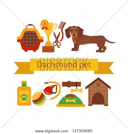Dachsund dog infografic concept with dog care isolated elements. Dachshund dog training  poster vector illustration. Colorful dachshund dog infografic icons concept. Puppy dachshund dog care concept
