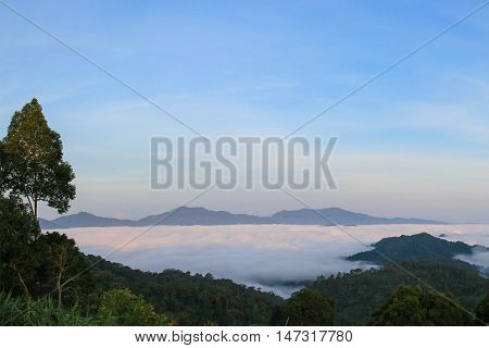 view of mountain with fog in rain forest