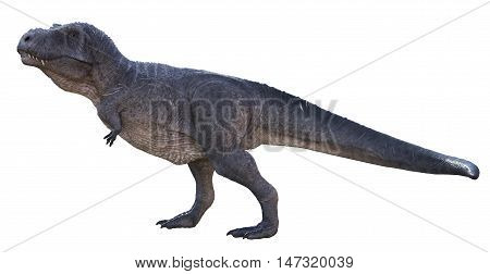 3D rendering of Tyrannosaurus Rex observing, isolated on white background.