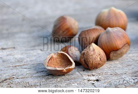 cloe on shelled hazelnuts on a wooden plank