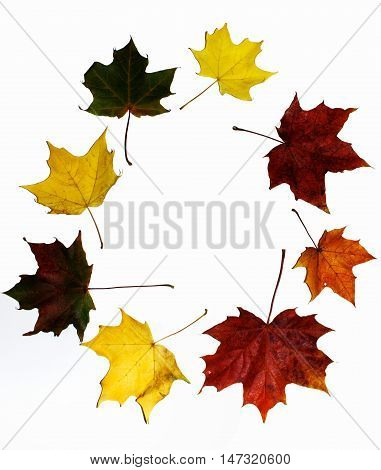 Eight multi-colored maple leaves are arranged in a circle on a white background