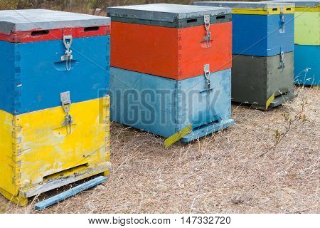 Bee Hives Next To A Pine Forest In Summer. Wooden Honey Beehives In The Meadow. Row Of Colorful Bee