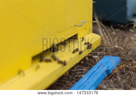 Honey Bees Swarming And Flying Around Their Beehive. Selective Focus. Bees Coming In And Out Of Thei