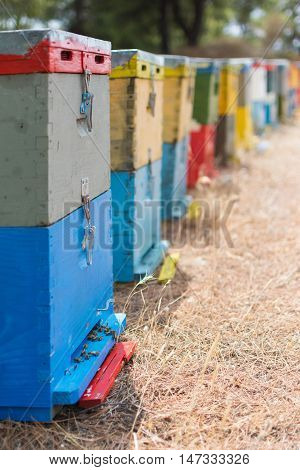 Row Of Colorful Bee Hives With Trees In The Background. Bee Hives Next To A Pine Forest In Summer. W