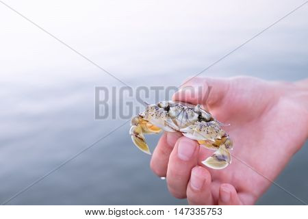 Hand holding small yellow-white crab with black eyes on sunset Koh Chang Thailand