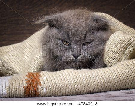 Sleepy, Annoyed, Awake Cat Gets Out Of The Plaid. Cat Woke Up, Do Not Give Sleep