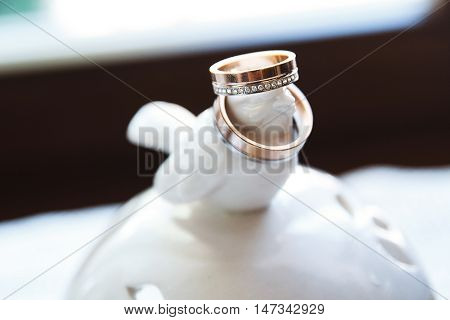 two gold wedding rings for white bird