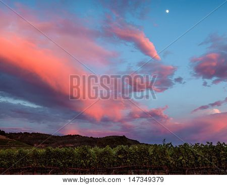Colorful, saturated clouds over a Napa vineyard row at sunset. Dramatic blue, pink, purple clouds over a row of California grapevines at dusk. Moon rising.