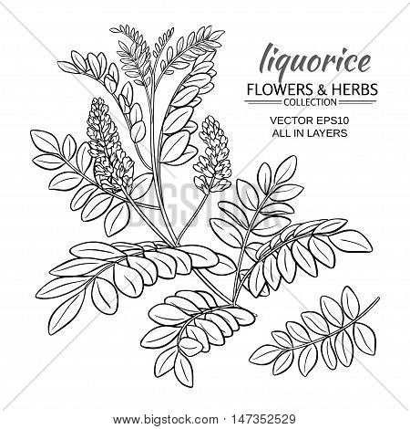 illustration with liquorise plant on white background