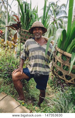 Full length shot of happy old man carrying seedlings on his shoulders. Senior farmer standing in his farm.