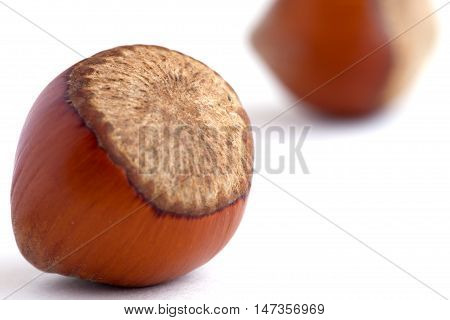 Hazelnut in shells on the white background