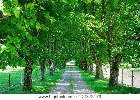 Walkway lane path with green trees in forest. Beautiful alley in park. Pathway way through forest in Norway
