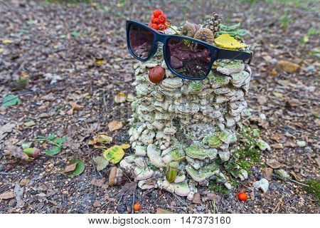 Sunglasses on an old stump in the form treefolk. Nature