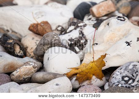 a fallen maple leaf on the stones in October