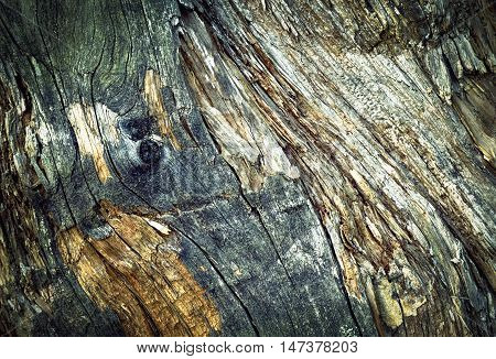abstract background or texture detail of an old moldy tree stump