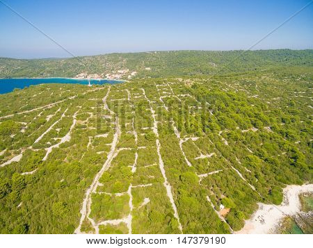 View of forest pines on the island of Dugi Otok, Croatia
