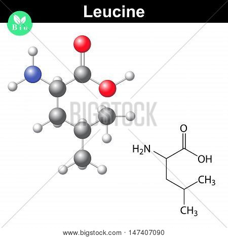 Leucine essential amino acid molecular structure and model 2d and 3d illustration vector on white background eps 8