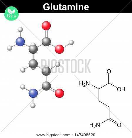 Glutamine proteinogenic amino acid - chemical formula and model 2d and 3d illustration vector isolated on white background eps 8