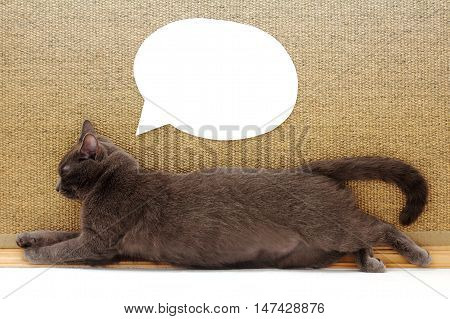 cat resting in sprawling pose next to a clean paper cuttings for pictures and inscriptions / dreams and thoughts in mind