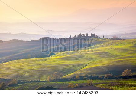 Tuscany landscape at gentle sunrise light. Typical for the region tuscan farm houses, hills, vineyard. Italy, Europe