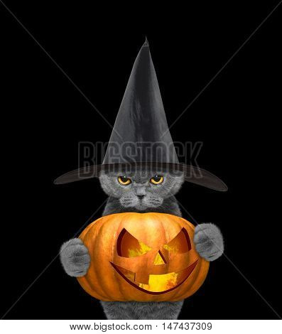 Cat in a costume with halloweens pumpkin -- isolated on black