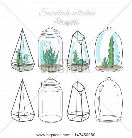 set of floral compositions with cactus and succulents in decorative glass containers