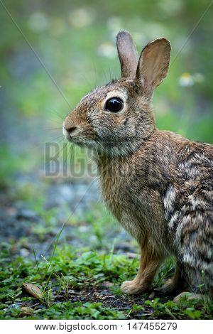 a pretty small hare in the meadow