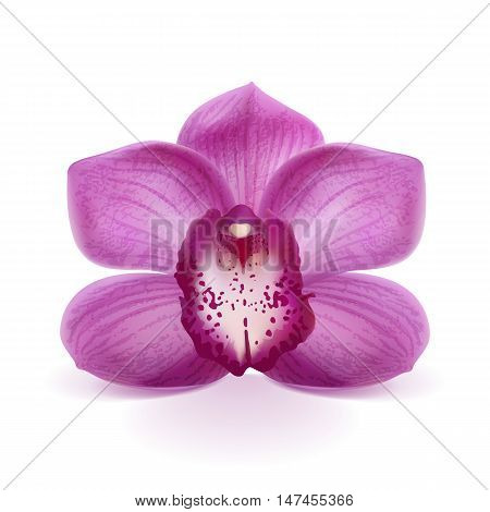 flower purple orchid on a white background