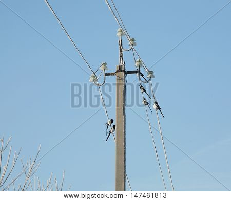 Magpies On Wires