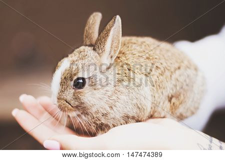 Cute lovely small rabbit or hare in the hand