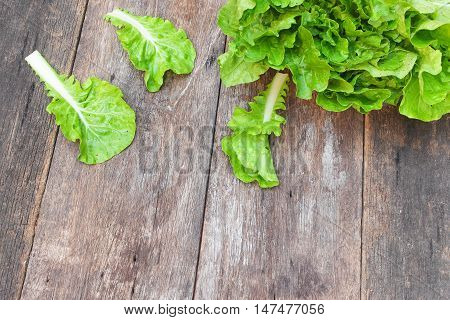 chinese cabbage organic vegetables on a wooden table. Insect eat hole in the leaf.