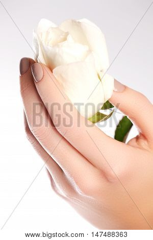 Beauty Delicate Hands With Manicure Holding Flower Rose Isolated