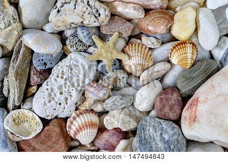 Detail of the various sea pebbles on the beach with shells